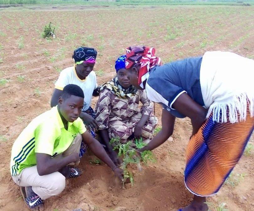 Jumelage – Des nouvelles du projet plantation !